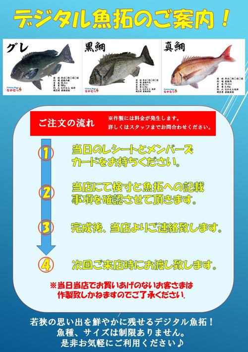 魚拓案内 手順